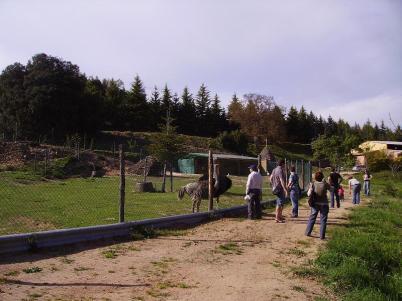 Passejant al costat del tancat dels animals