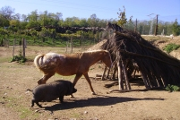 Animals d'Els Cortals